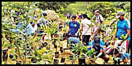बिहार में लगाए जायेंगे डेढ़ करोड़ पौधे,1 से 15 अगस्त तक मनेगा वन महोत्सव