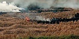 पराली जलानेवाले किसानों पर कार्रवाई शुरू, 78 किसानों का निबंधन लॉक, 3 साल तक नहीं मिलेगा सुविधाओं का लाभ