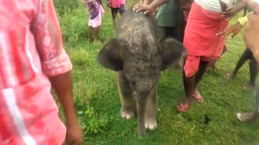 रामगढ़ में लोगों ने दिखाई इंसानियत, हाथी के बच्चे को झुण्ड से मिलाया
