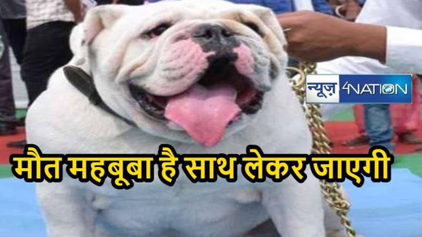 पटना में आयोजित डॉग शो में जीत के बाद भी हार गया सवा लाख रुपये का कुत्ता