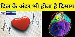 क्या आप जानते हैं, दिल के अंदर भी होता है दिमाग, वैज्ञानिकों ने बनाया 3डी नक्शा