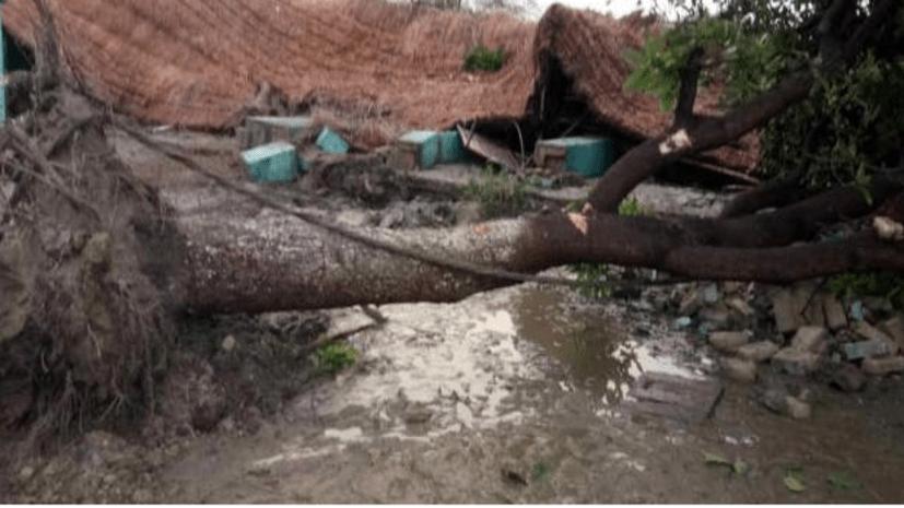 बिहार के कई जिलों में आंधी-तूफान, गोपालगंज में तीन लोगों की गई जान