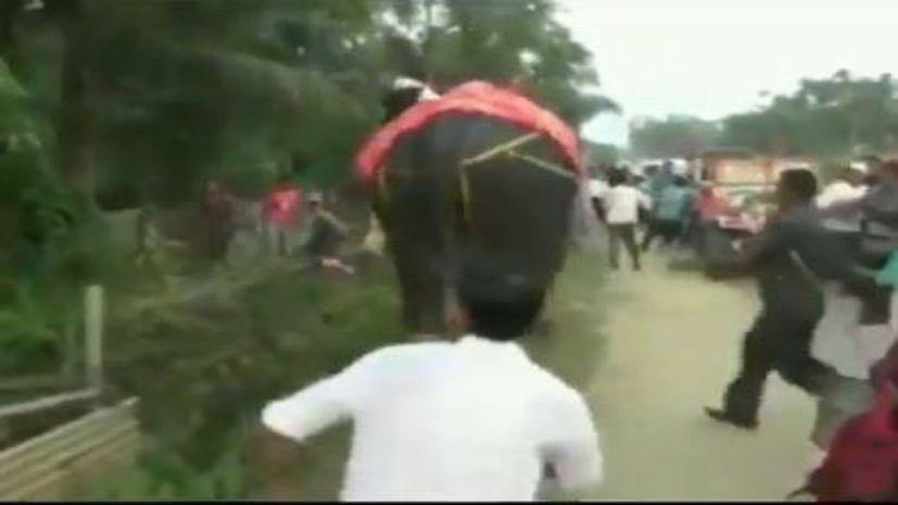 नेता जी को भारी पड़ी हाथी की सवारी, समर्थकों के सामने गजराज ने चटा दी धूल