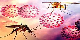 मच्छर के काटने से भी फैल सकता है कोरोना वायरस? क्या कहता है WHO का नया लॉजिक