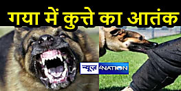 कुत्ते के आतंक से लोग खौफ में, 1 दिन में 52 लोगों को बनाया शिकार