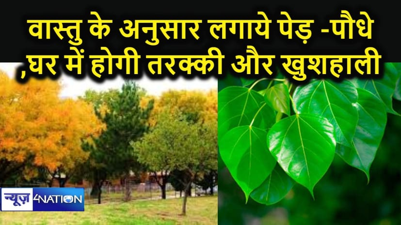 वास्तु के अनुसार घर में लगायें पेड़ –पौधे,  सकारात्मक ऊर्जा और  खुशहाली का कारक है वृक्षारोपण