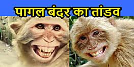 भागलपुर में घूम रहा है पागल बंदर, 30 लोगों से ज्यादा को किया घायल, हो जायें सावधान