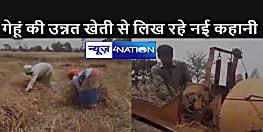 गेहूं के इस उन्नत किस्म के पैदावर से किसान गढ़ रहे हैं नई कहानी, सिंधू घाटी सभ्यता से भी है इसका संबंध