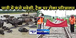 बिहार में बाढ़ः कटिहार में जलप्रलय से बिगड़े हालात, बिना चारा मवेशियों की हालत खराब, रेलवे ट्रैक पर मानसून पेट्रोलिंग जारी
