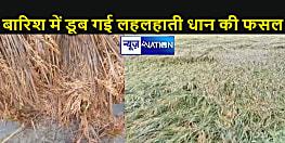 चार बाढ़ और बारिश ने किसानों को किया बर्बाद, पानी में डूब गई तैयार हो चुकी धान की फसल
