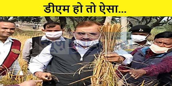 DM साहब ने हंसुली से दनादन  शुरू कर दिया धान की कटनी, किसानों ने कहा- हूजुर ने कमाल कर दिया