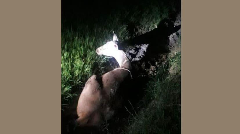 गांव के खेत से बरामद हुआ घायल हिरण, पुलिस ने किया वन विभाग के हवाले