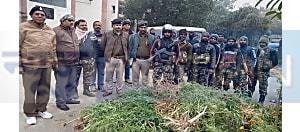 नवादा में पुलिस ने नष्ट किये लाखों रूपये के गांजे के पौधे, दो तस्करों के खिलाफ मामला दर्ज