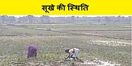 सिंचाई विभाग की लचर व्यवस्था का शिकार हुए किसान, नहर में पानी नहीं छोड़ने से सूखे की स्थिति