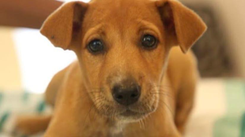 शर्मनाक : सिक्योरिटी गार्ड ने किया कुत्ते के साथ बलात्कार... वायरल वीडियो के बाद गिरफ्तार ...