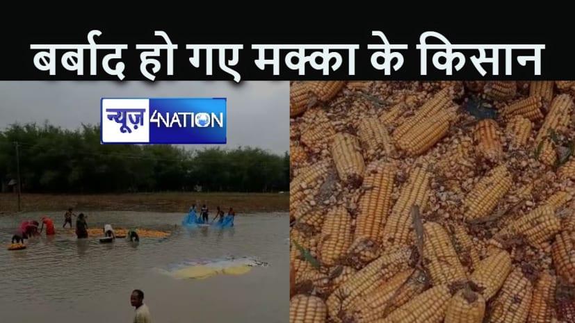 BIHAR NEWS : लॉकडाउन और यास तूफान की मार ने मक्का उत्पादकों को कर दिया बर्बाद, कर्ज में डूबे किसान सरकार से मांग रहे हैं मदद