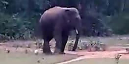 खेलने के दौरान युवकों ने हाथी के सामने फेंका फुटबॉल, फिर जानिए हाथी ने उसके साथ क्या किया?