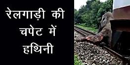 ट्रेन से टकराई हथिनी, चालक और हथिनी गंभीर रूप से जख्मी