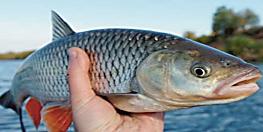थानेदार मछली-मुर्गा की दूकानें नहीं करें बंद,पशुपालन सचिव ने DGP को लिखा पत्र