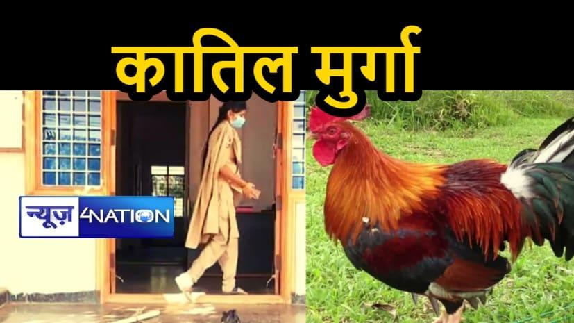 मुर्गे पर लगा क़त्ल का इल्जाम, कोर्ट के सामने होगा पेश, जज सुनायेंगे फैसला