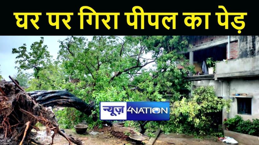 GAYA NEWS : बारिश से घर पर गिरा पीपल का पेड़, बिजली आपूर्ति हुई बाधित