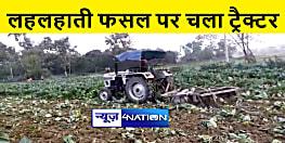 एक रूपये किलो भी नहीं बिका गोभी तो किसान ने खेत में चला दी ट्रैक्टर, जानिए पूरा मामला
