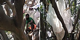 कोरोना से जंग : घर के अंदर आइसोलेशन के लिए नहीं है कमरा, पेड़ पर बनाया अपना बसेरा