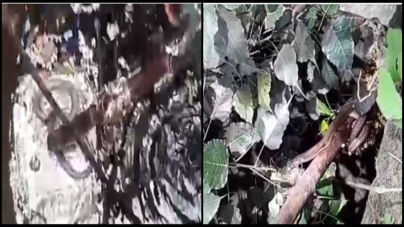 कुंए में गिरा कोबरा, देखिए सबसे खतरनाक सांप के रेस्क्यू ऑपरेशन की लाइव तस्वीरें...