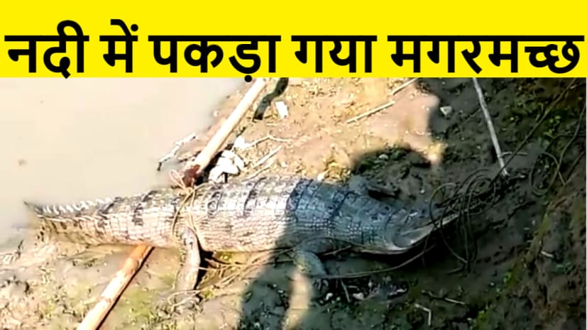 मछली मारने के दौरान जाल में फंसा मगरमच्छ, दहशत में ग्रामीण