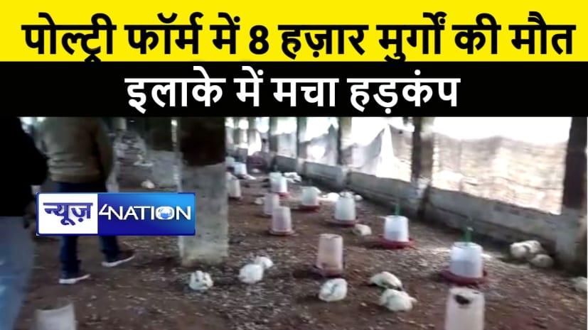 वैशाली के पोल्ट्री फॉर्म में एक साथ 8 हज़ार मुर्गों की हुई मौत, इलाके में मचा हडकंप