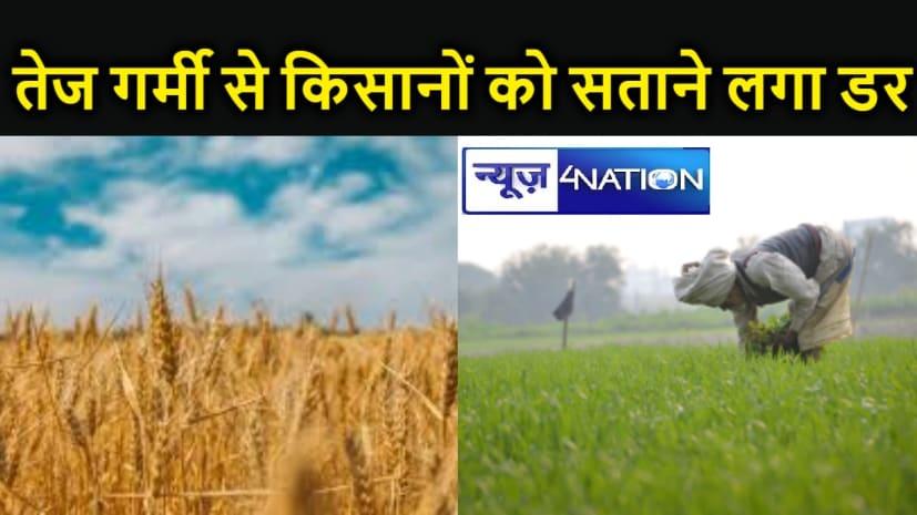 गर्मी के मिजाज से किसान परेशान, 30 डिग्री से अधिक रहा पारा तो गेहूं उत्पादन में इतने प्रतिशत तक की गिरावट,कैसे?