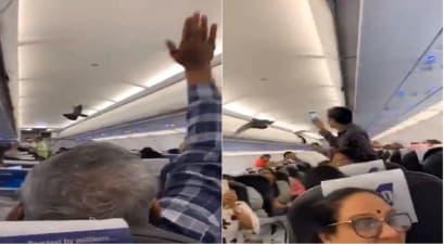विमान के अंदर घुसा कबूतर, यात्रियों में मचा हड़कंप