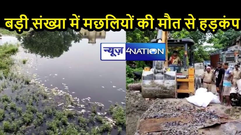 BIHAR NEWS: अचानक ही तालाब में मर गई सैंकड़ों मछलियां, ग्रामीणों में मचा हड़कंप, राजद नेत्री ने कह दी यह बात...