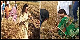 हेमामालिनी के बाद अब बिहार की यह सांसद खेतों में काट रहीं हैं गेहूं