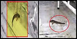 बिहार के सरकारी अस्पताल के वार्ड में तैर रही मछली, यकीन न हो तो तस्वीर देखिए....