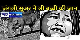 मुजफ्फरपुर के औराई में जंगली सुअर के काटने से बालिका की मौत, बाहर खेलने गई थी बच्ची