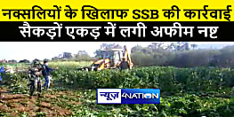 एसएसबी ने नक्सलियों की तोड़ी कमर, सैकड़ों एकड़ जमीन पर लगी अफीम को किया नष्ट