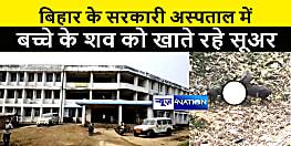 बिहार में फिर सामने आई स्वास्थ्य विभाग की लापरवाही, अस्पताल परिसर में बच्चे के शव को नोंच कर खाते रहे सुअर