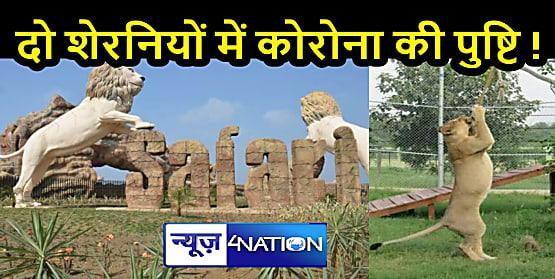 NATIONAL NEWS: यह लहर है खतरनाक! सेकेंड वेव में जानवर भी हो रहे संक्रमित, 10 शेर-शेरनियों में संक्रमण की पुष्टि