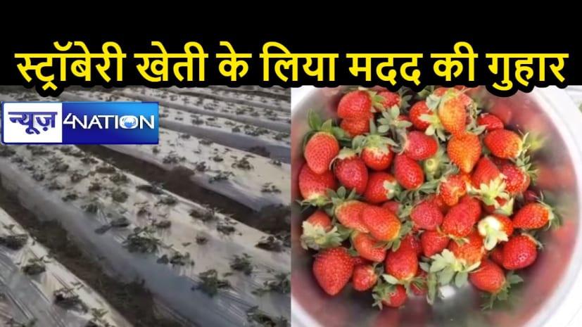 तीन सालों से की स्ट्रॉबेरी की खेती, पर नहीं मिली सरकार से मदद