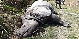 वाल्मीकि टाइगर रिजर्व में नेपाली गैंडा की संदिग्ध मौत, शरीर पर है जख्म के निशान