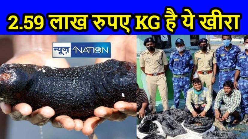 भारत में बढ़ रही है 'समुद्री खीरे' की स्मगलिंग, 2.59 लाख रुपए KG है कीमत