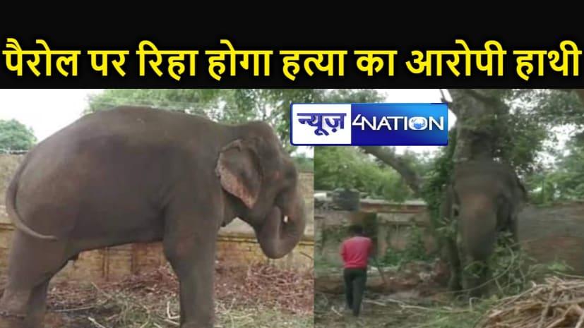 टूटेगीं बेड़ियां!  पैरोल पर रिहा होगा हाथी, हत्या के आरोप में डेढ़ साल से जंजीरों में कैद काट रहा है सजा