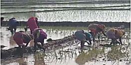 खेती की परम्परा : रोपनी के गीतों से गुंजायमान है धान का कटोरा