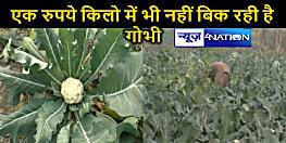 एक रुपये किलो भी नहीं बिक रही है गोभी, मवेशी का चारा बन रही है फूलगोभी