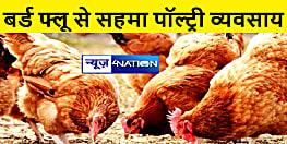 बिहार में बर्ड फ्लू की पुष्टि नहीं, पॉल्ट्री व्यवसाय में 80 फीसदी की आई गिरावट