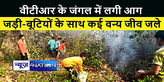 BAGAHA NEWS : वीटीआर के जंगल में लगी भीषण आग, जड़ी बूटियों के साथ कई वन्य जीव जलकर राख