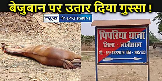 BIHAR NEWS: दरिंदगी की हद: दो गुटों की लड़ाई में घोड़े की जान पर बन आयी, मार-मारकर कर दिया अधमरा, ईलाज जारी