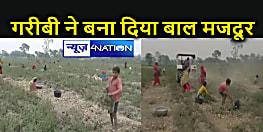 Katihar News : 10₹ के लिए आलू के खेत में ट्रैक्टर के पीछे भाग रहे बच्चे, इस जिले में बाल श्रम कानून कागजों में सिमटी