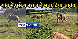 BIHAR NEWS: नेपाल सीमा से सटे गांव में घुसे गजराज, दो लोगों की कुचलकर ली जान, फसलों को भी पहुंचाया नुकसान